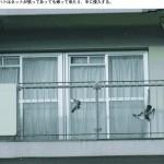 撃退ドットマン 鳥害対策は何をやっても効果がないと言われる。 一番確実と思われるネットでも写真のようなことがあります。 福岡県宗像市