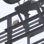 撃退ドットマン カラスの巣の被害 配電用鉄塔 熊本県 2015年4月