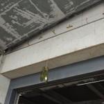 撃退ドットマン ハトの糞害 倉庫の入り口 東京都港区 2017年3月