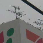 撃退ドットマン ムクドリの騒音と糞害 ビルの屋上 千葉県千葉市 平成25年8月